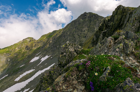 grass and some purple flowers on a rocky cliffs of Fagaras mountains in Romania. beautiful summer weather with clouds on a blue sky Stock Photo
