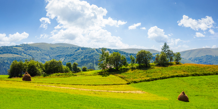 panorama of grassy agricultural field with haystacks and orchard. lovely rural summer landscape in mountains Stock Photo