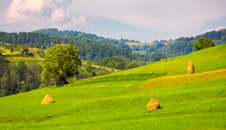 grassy rural field on hillside. few haystack and tree on a slope. lovely countryside afternoon