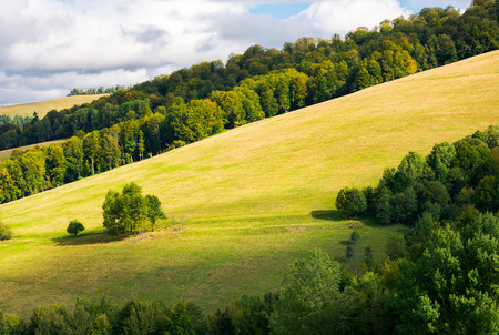 grassy meadow on a forested hillside. bunch of trees stand separately. lovely nature scenery