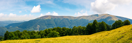 panoramic scene of a summer landscape. beautiful view of a beech forest on a grassy meadow and distant mountain. bright and warm august Stock Photo