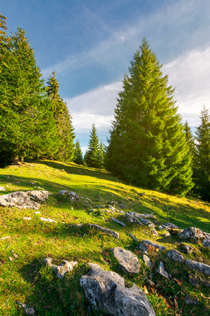 rocks among the grassy glade in forest. lovely nature background Stock Photo