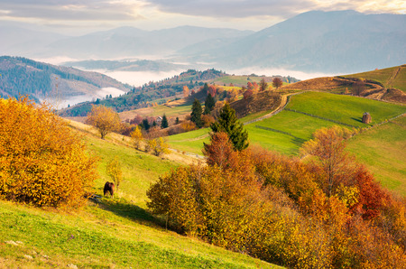 beautiful mountainous countryside in morning fog. beautiful vivid color of autumn at sunrise Stock Photo