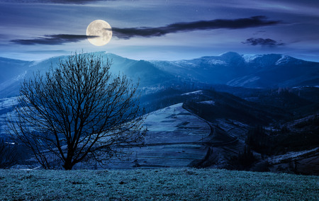 tree on the grassy hill at night in full moon light. mountain ridge with snowy tops in the distance. fine autumn weather