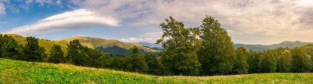 panorama of a beautiful summer landscape. ancient beech forest on the grassy meadow and mountain ridge in the distance under the gorgeous evening sky