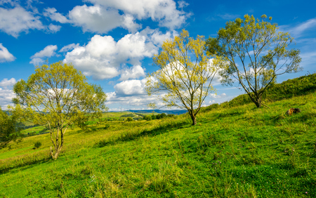 row of trees on the grassy slope. warm autumn weather with beautiful sky Stock Photo