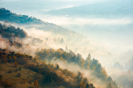 beautiful foggy autumn background. lovely scenery with forest on hill Stock Photo
