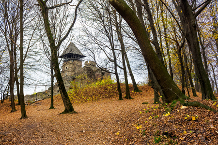 medieval fortress in autumn leafless forest. Nevytsky castle is popular tourist destination of TransCarpathia, Ukraine Stock Photo