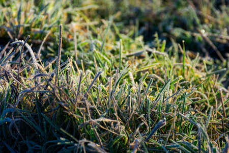 closeup of grass in rime at sunrise. lovely autumnal nature background. Stock Photo