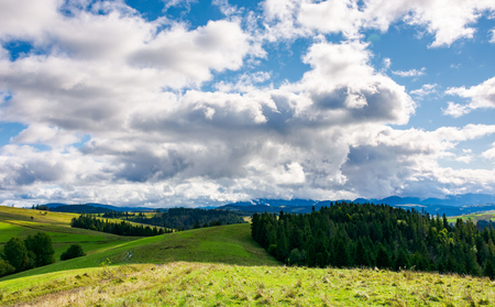 spruce forests of carpathian mountains. beautiful autumn landscape with dramatic cloudscape