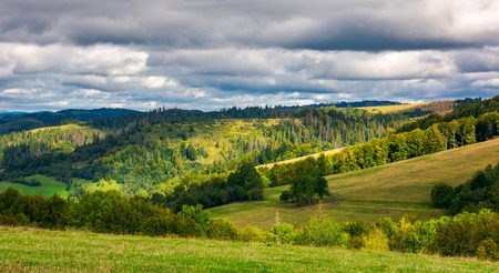 forested rolling hill on overcast day. beautiful early autumn scenery in mountains Stock Photo