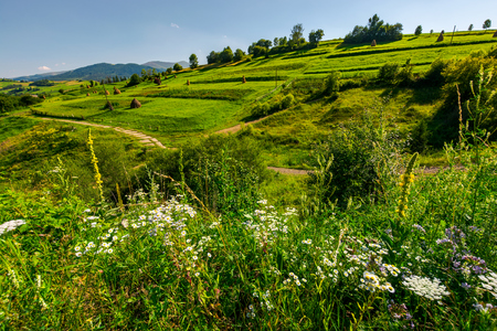 beautiful rural area in mountains. lovely summer scenery in afternoon. path along the agricultural fields with haystacks Stock Photo