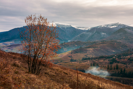 tree in red foliage on hillside. distant mountain with snowy top. village down in the valley. gloomy late autumn scenery Stockfoto