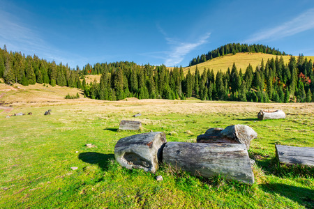 stumps and logs on a grassy meadow. spruce forest on the hill. beautiful landscape in mountain on a sunny autumn day Stock Photo