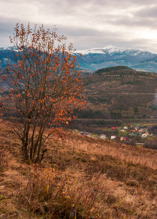 tree in red foliage on hillside. distant mountain with snowy top. village down in the valley. gloomy late autumn scenery Stock Photo