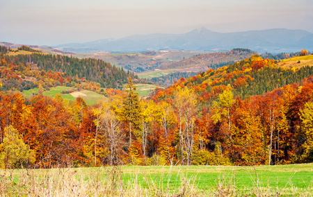 colorful fall foliage mixed forest. lovely countryside landscape in mountains Stock Photo