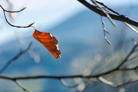 last leaf on the tree. beautiful autumn background in bright light