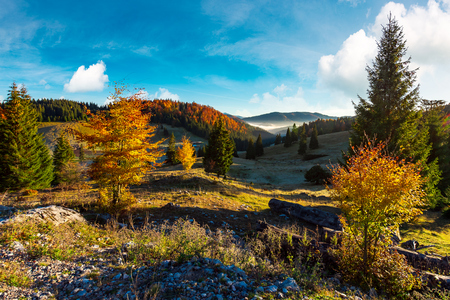 beautiful landscape in mountains. wonderful autumn sunrise with fog in the distant valley. mixed forest in colorful foliage Stock Photo