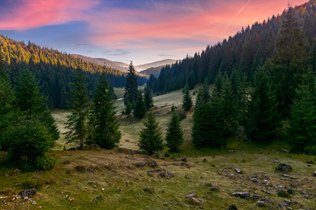 spruce forest in foggy valley at reddish sunrise. beautiful autumn landscape in mountains. Apuseni Natural Park, Romania Stock Photo