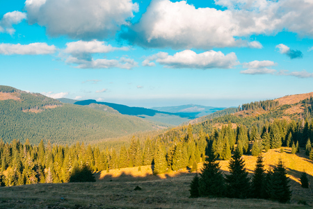 beautiful mountainous landscape. spruce forest on hill sides. wonderful weather with fluffy clouds on the blue sky. creative toning Stock Photo