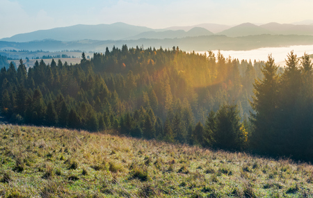 autumn landscape in mountains. spruce forest on a grassy hill. glowing fog in the distant valley. wonderful scenery at sunrise 版權商用圖片