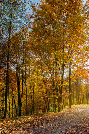 road through forest in fall foliage. beautiful sunny background. nice place for a walk Stock Photo
