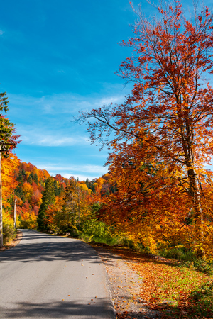 ride through fall foliage forest. beautiful sunny day in mountains Stock Photo
