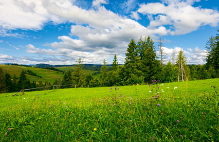 beautiful grassy meadow in summer. spruce trees and wooden fence on the edge of a hill. beautiful countryside beneath a wonderful sky with cloud formations