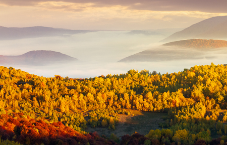 beautiful autumn landscape in mountains. cloud inversion above the valley and yellow trees in sunlight Stock Photo