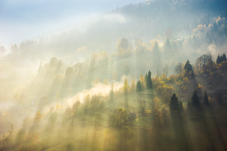 beautiful nature scene in fog. bursts of light come through haze among the trees down the hill. wonderful autumn atmosphere