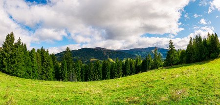panorama of alpine meadow in forest on hill. beautiful early autumn landscape in Carpathian mountains. joyful vacation in wilderness Stock Photo