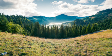 panorama of mountain and foggy valley. beautiful landscape with spruce forest on the hill. wonderful weather in Apuseni Natural Park of Romania at sunrise Stock Photo - 108409381