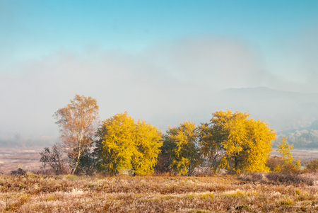 beautiful autumn landscape in the valley. fog above the meadow and yellow trees in sunlight. mountain is seen in the far distance