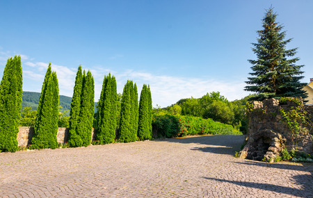 cypresses trees by the wall in pawed yard. beautiful summer countryside in mountains. wonderful sunny weather Stock Photo
