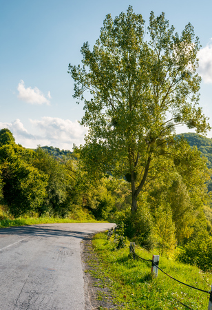 countryside road through forest in mountains. lovely transportation scenery in early autumn afternoon. vertical Stock Photo