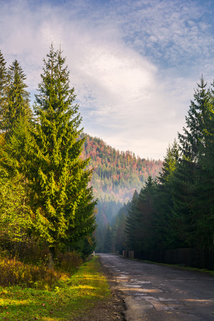 road through deep spruce forest. some haze in the distance. lovely autumn scenery in mountains. wonderful sunny morning. vertical Stock Photo