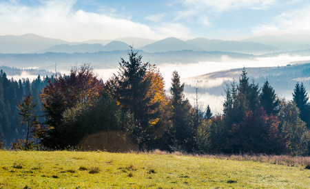 wonderful autumn landscape. trees on the grassy hill. distant valley in glowing fog