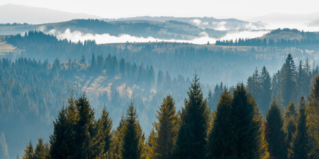tree tops above the foggy valley. wonderful autumn landscape