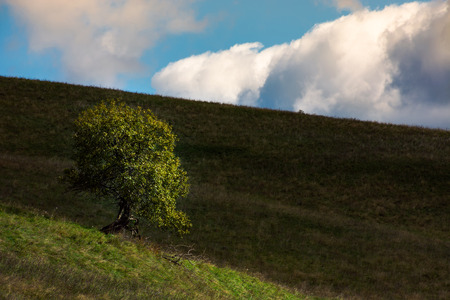 lonely tree on hill side on a cloudy autumn day. lovely natural background Stock fotó