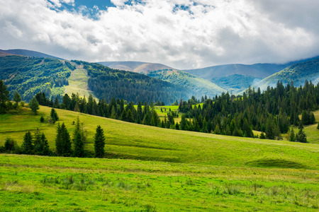 beautiful green valley with coniferous forest. wonderful landscape in mountains. huge cloud almost cover the sky. lovely early autumn scene