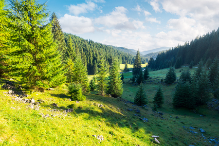 lovely valley with spruce forest. wonderful landscape of Apuseni mountains in autumn. beautiful cloudscape above the ridge. travel Romania discover europe concept Stock Photo