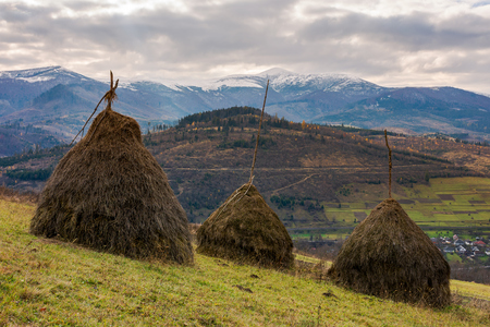 haystacks on the hill. gloomy late autumn landscape with overcast sky. snow on tops of distant mountain ridge. village down in the valley
