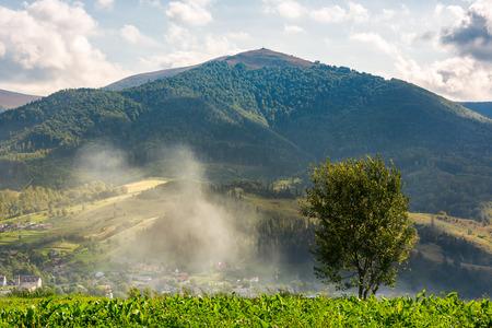 arbre solitaire sur la prairie en fumée. Montagne Temnatyk au loin sous le ciel nuageux de l'après-midi. beau paysage de la campagne montagneuse des Carpates. emplacement Volovets, Ukraine