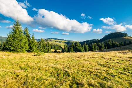 beautiful landscape of Apuseni mountains in autumn. spruce forest on a grassy meadow. gorgeous cloudscape above the ridge. travel Romania discover europe concept Stock Photo