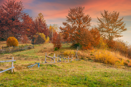 reddish sunrise in autumn countryside. lovely rural scenery with wooden fence around the orchard on the hill. trees in red foliage
