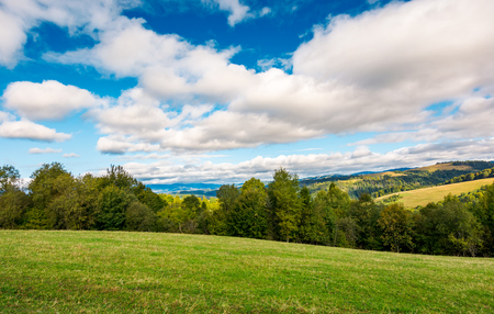 beautiful countryside in early autumn. grassy rolling hills with some trees. wonderful cloudscape on an azure sky above the landscape