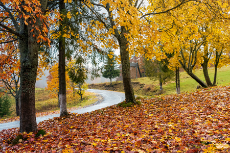 trees in colorful foliage by the road. lovely countryside scenery in autumn Stock Photo