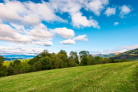 early autumn countryside in mountains. row of trees behind the grassy meadow. fluffy clouds on a blue sky Stock Photo