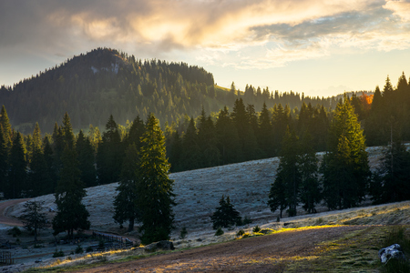 majestic sunrise in mountainous countryside. spruce tree top in morning light. grassy meadow with hoar in shade of the forest. beautiful cloud above the distant mountain Stock Photo