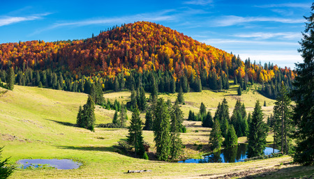 splendid autumn landscape on a bright day. spruce trees on hill around the pond. forest in colorful foliage on a distant mountain Stock Photo